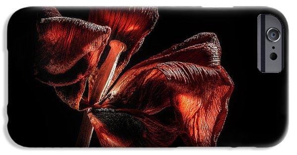 Tulip iPhone 6s Case - Dried Tulip Blossom by Scott Norris