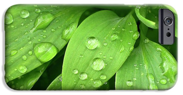 Drops On Leaves IPhone Case by Carlos Caetano