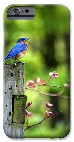 Eastern Bluebird IPhone 6s Case by Christina Rollo