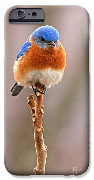 Eastern Bluebird Treetop Perch IPhone 6s Case