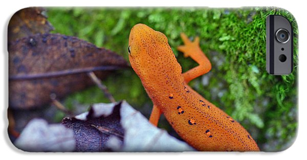 Newts iPhone 6s Case - Eastern Newt by David Rucker
