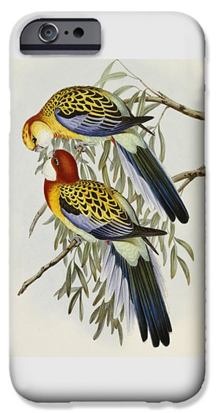 Eastern Rosella IPhone 6s Case by John Gould