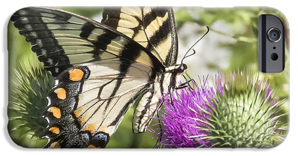 Eastern Tiger Swallowtail IPhone 6s Case by Ricky L Jones