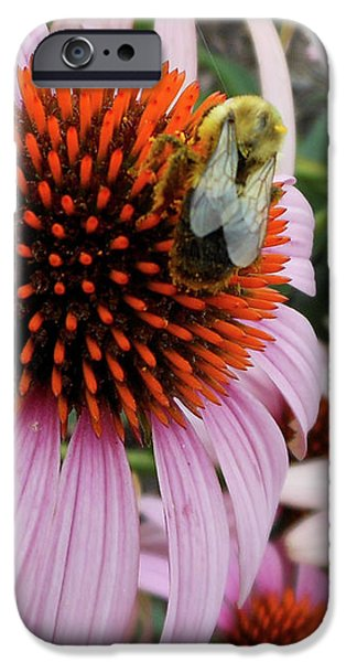 Echinacea Tea Time For Bee IPhone 6s Case