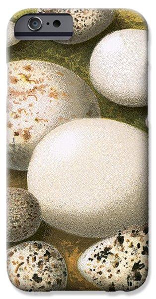 Eggs IPhone 6s Case