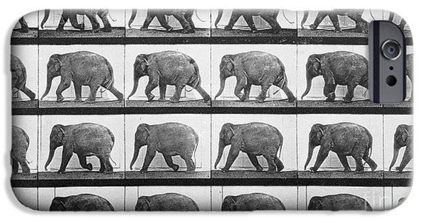 Elephant Walking IPhone 6s Case by Eadweard Muybridge