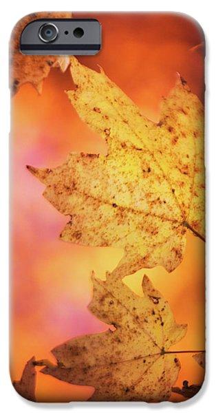 Fall Reveries IPhone 6s Case by Priya Saihgal