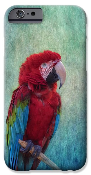 Scarlet iPhone 6s Case - Feathered Friend by Kim Hojnacki