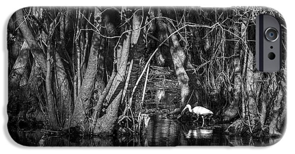 Ibis iPhone 6s Case - Feeding Time by Marvin Spates
