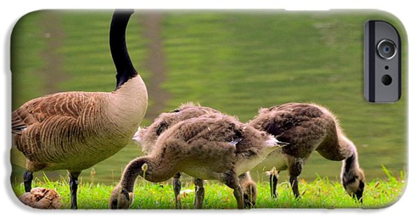 Gosling iPhone 6s Case - Feeding Time With The Babies by Lisa Wooten