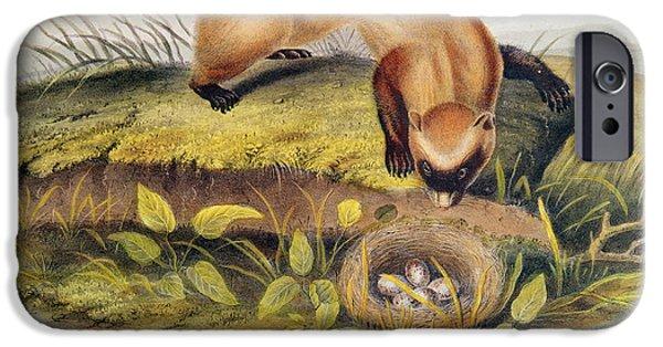 Ferret IPhone Case by John James Audubon