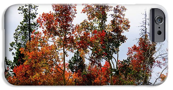 IPhone 6s Case featuring the photograph Festive Fall by Karen Shackles