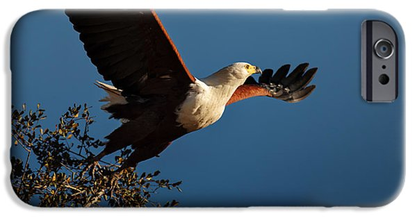 Eagle iPhone 6s Case - Fish Eagle Taking Flight by Johan Swanepoel