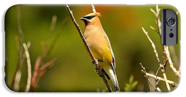 Fishercap Cedar Waxwing IPhone 6s Case by Adam Jewell