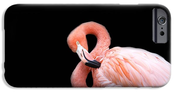 Flamingo 3 IPhone 6s Case