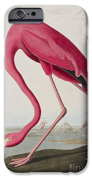 Flamingo IPhone 6s Case by John James Audubon