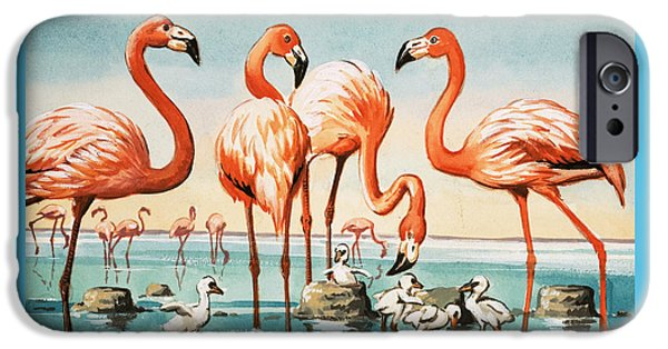 Flamingoes IPhone 6s Case