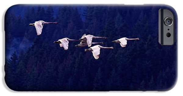 Swan iPhone 6s Case - Flight Of The Swans by Sharon Talson