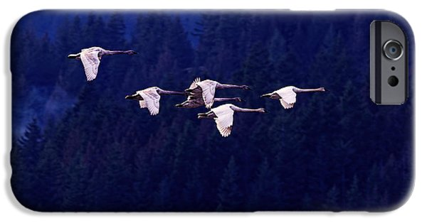 Flight Of The Swans IPhone 6s Case