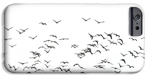 Flock Of Beautiful Migratory Lapwing Birds In Clear Winter Sky I IPhone 6s Case