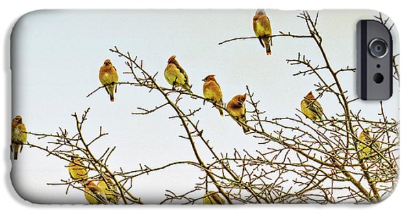 Flock Of Cedar Waxwings  IPhone 6s Case by Geraldine Scull