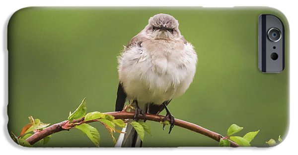 Fluffy Mockingbird IPhone 6s Case by Terry DeLuco