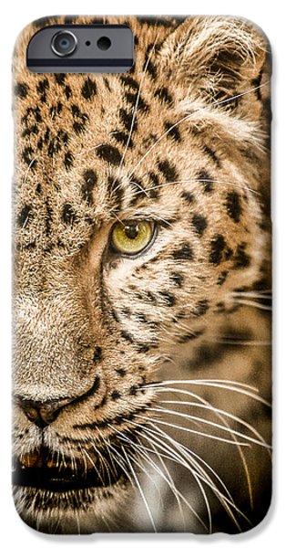 Leopard iPhone 6s Case - Focus by Paul Neville