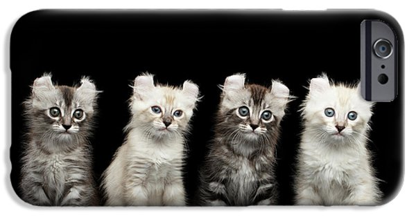 Cat iPhone 6s Case - Four American Curl Kittens With Twisted Ears Isolated Black Background by Sergey Taran