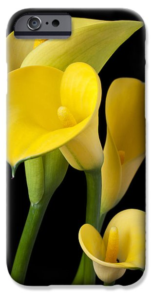 Lily iPhone 6s Case - Four Yellow Calla Lilies by Garry Gay