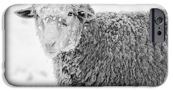 Sheep iPhone 6s Case - Frozen Dinner by Mike  Dawson