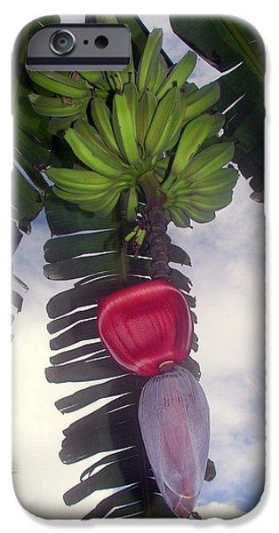 Fruitful Beauty IPhone 6s Case by Karen Wiles