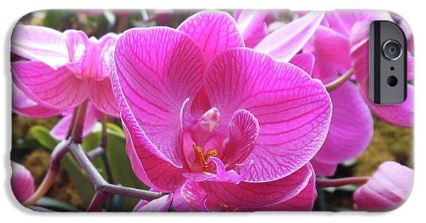 Fuchsia Flower Field IPhone 6s Case