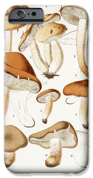 Fungi IPhone 6s Case by Jean-Baptiste Barla