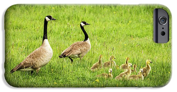 Gosling iPhone 6s Case - Geese And Goslings - Canada Geese by TL Mair