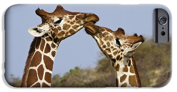 Giraffe Kisses IPhone 6s Case by Michele Burgess