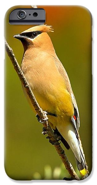 Glacier Cedar Waxwing IPhone 6s Case by Adam Jewell