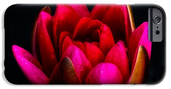 Lily iPhone 6s Case - Glorious Lily by Adrian Evans