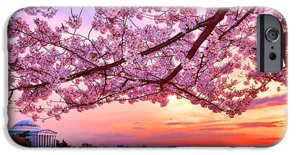 Glorious Sunset Over Cherry Tree At The Jefferson Memorial  IPhone 6s Case by Olivier Le Queinec