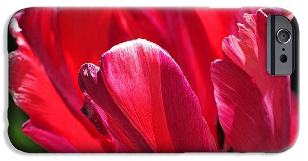 Glowing Red Tulip IPhone 6s Case