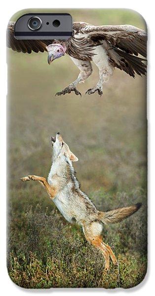 Golden Jackal, Canis Aureus, Leaping At Vulture IPhone 6s Case