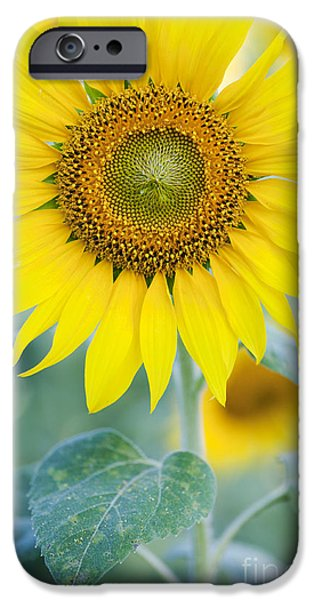 Golden Sunflower IPhone 6s Case by Tim Gainey