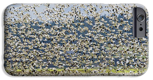 Goose Storm IPhone 6s Case by Mike Dawson