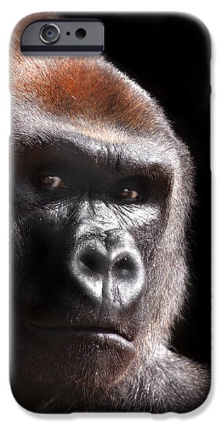 Gorilla ... Kouillou IPhone 6s Case by Stephie Butler
