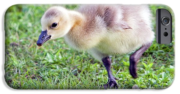 Gosling iPhone 6s Case - Gosling by Randall Ingalls