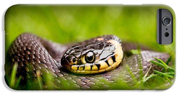 Grass Snake - Natrix Natrix IPhone 6s Case