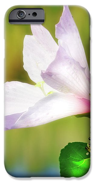 Grasshopper And Flower IPhone 6s Case