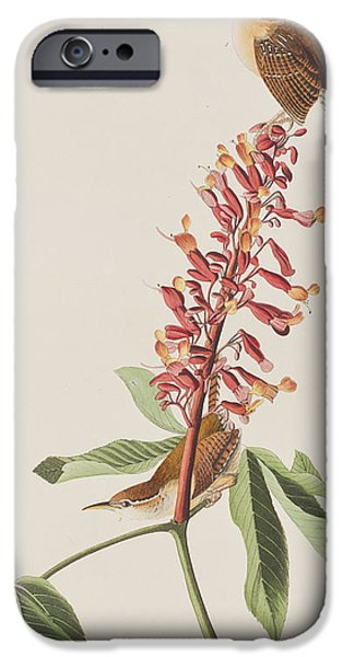 Great Carolina Wren IPhone 6s Case by John James Audubon