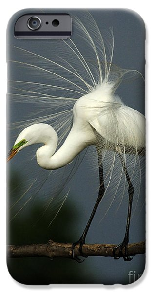 Majestic Great White Egret High Island Texas IPhone 6s Case by Bob Christopher