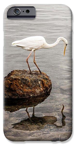 Great White Heron IPhone 6s Case by Elena Elisseeva
