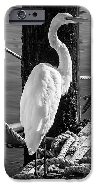 Great White Heron In Black And White IPhone 6s Case by Garry Gay